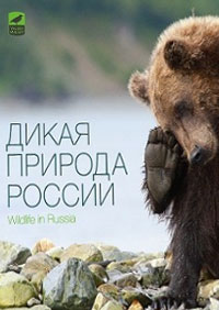 wildlife-russia